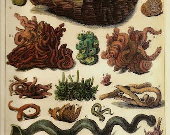 SHELLS CORALS Art Print Frameable Original 2009 Book Plate 6 Beautiful Shells and Corals French Plates Ocean Marine Sea Life