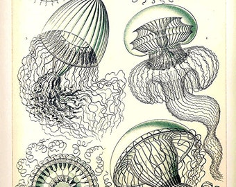 Ernst Haeckel JELLYFISH CORALS 2010 Art Print Original Book PLATE 35 36 Beautiful Ocean Corals Sea Life Flowers and French Blue Jellyfish