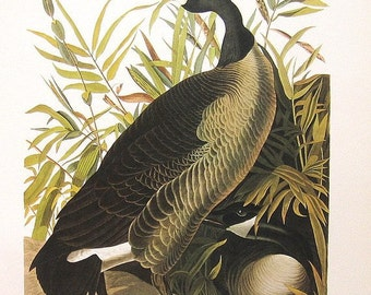 Audubon Birds of America Vintage 1979 Art Print Collectable Book PLATE 132 Canada Goose