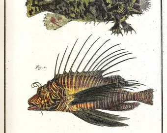 Vintage FISH PRINT 1990 Art Book Plate 18 Antique Pinted in 1778 Moorish Idol Exotic Beautiful Natural Science to Frame