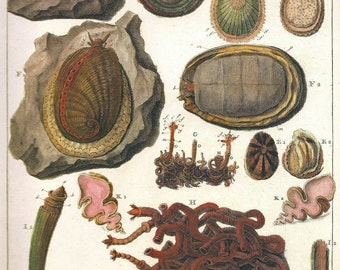 SEA SHELLS CORALS Print Art 2009 Book Plate 182 Beautiful Antique French Fossil Molluses Engraved Ocean Marine Sea Life Nature