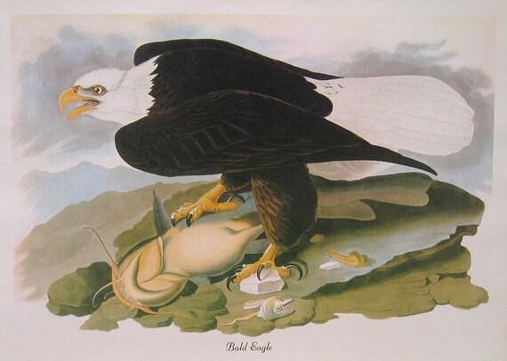 Audubon BALD EAGLE Birds of America Vintage 1979 Art Print Collectable Book PLATE 154 Bald Eagle and Fish