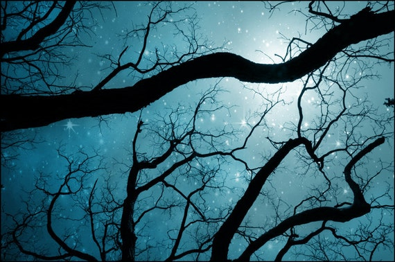 nature photography, stars, night sky, sapphire blue, teal, trees, peaceful, serene, turquoise, blue, stars, nursery idea, 8x10
