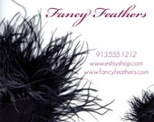 Business Card Designs - Fancy Feathers