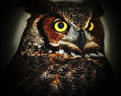Portrait of a Great HORNED OWL no4 -- 8x8 print