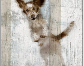 Flying dog 1