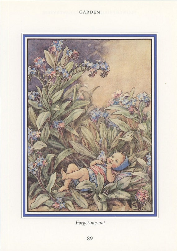 Forget Me Not Garden Fairy, Flower Fairies Of The Countryside, Cicely Mary Barker, Antique Print, USA, 1989