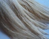 1 Dozen 3 inch White Striped SHORT Grizzly Rooster Feathers