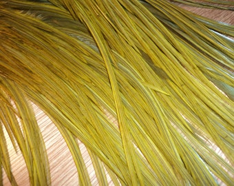1 Dozen 3-5 inch Olive SHORT Rooster Feathers