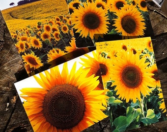 Sunflower Cards  -  Set of 4 -  5 x 7