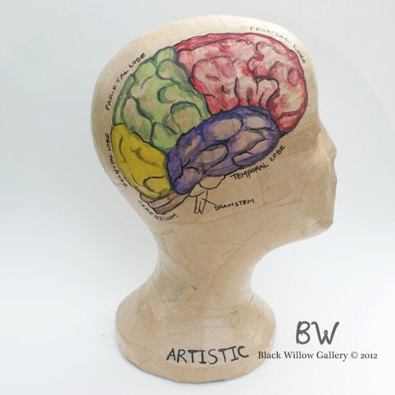 Brain Lobes Diagram Model Head Mannequin Art Display Wig Hat
