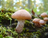 Fathers Day, Mushroom, Fall, Autumn, Woodland, Green, Emerald,  Summer, Earth Day,  Moss, Brown, Nature, 8x10 Print - Nature Photography