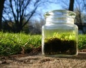 Moss Terrarium, Earth Day,  Spring, Green, Blue, Terrarium, Home Decor, Spring