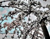 Spring Photography - Blossoms, Pastel, White, Blue, Spring, Flower, 8x10 Print, Nature Photography