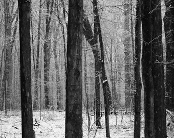 Christmas,  Woodland, Winter Photography, Snow,  Black and White,  Winter Decor, Modern, Holiday Decor, Gray, Snow, 8x10Print