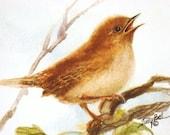 Wren Bird Print Watercolor Painting