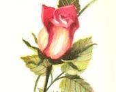 Red Rosebud Watercolor Painting Art Print