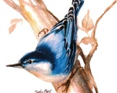 Blue Nuthatch - Watercolor Bird Print