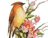 Cedar Waxwing Bird Art Print Of Watercolor