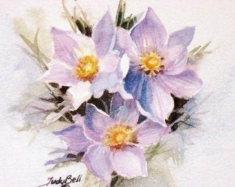 Crocus Wildflower Print - Pasque Flower Art