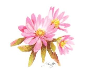 Bitterroot - Pink Wildflower, Watercolor Painting, Wildflower Print