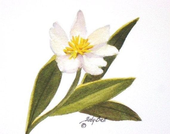 Wildflower Art- Marsh Marigold - Watercolor Print