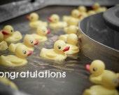 Congratulations Duckies - (5) Fine Art Photo Postcards (Blank)