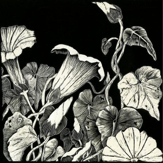 Morning Glory - Art Print from Original Scraperboard