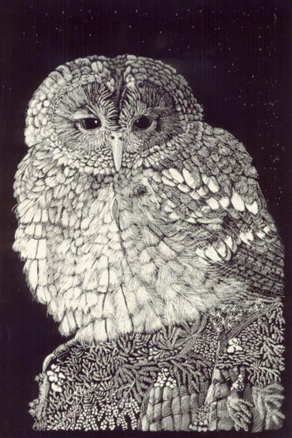 Little Owl Art Greetings Card of original Scraperboard