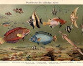 Colorful Saltwater Fish of Southern Seas Color Chromolithograph Original Print
