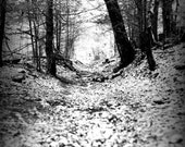 Shape Shifting Woods: 5 X 7 Photo Print