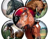 Digital Collage of Horse - 63 1x1 Inch Circle JPG images - Digital Collage Sheet
