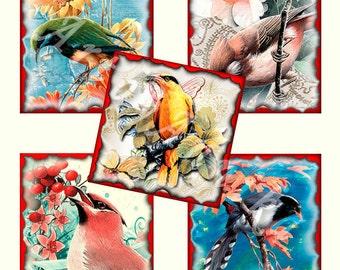 Digital Collage of  Magnificent birds Designs - 63 20x20mm Square JPG images - Digital Collage Sheet