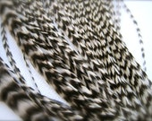 10 SHORTER NATURAL GRIZZLY Feathers for Feather Extensions & 3 extensions beads