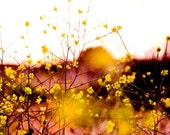 BOGO WINTER SALE - nature print - flowers photo yellow sunset serene yellow bright Nursery Decor fine art - 4x6 signed