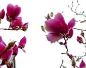 nature flower photography - color photo pink magenta feminine serene bright nursery decor fine art - 4x6 print