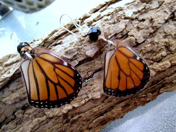 Monarch Butterfly Wing Earrings, Real Butterfly Jewelry