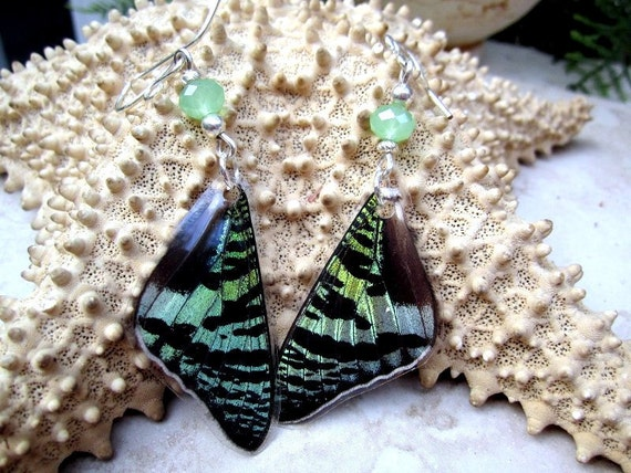 Sunset Moth Wing Earrings, Mint Green and Black
