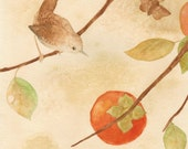 Wren with Persimmons