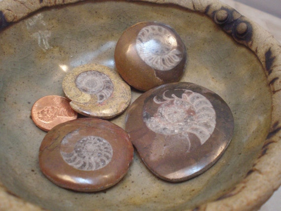 Fossils, 4 Moroccan Ammonite Fossil Buttons, or Cabochons, Jewelry Making, Mosaic Art, Meditation, D