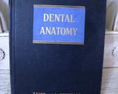 1949 Dental Anatomy Book