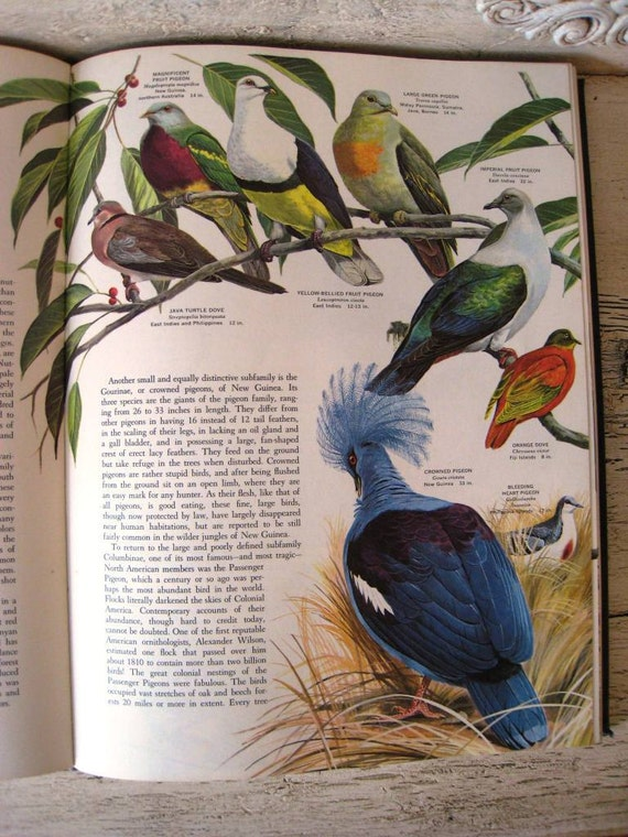 Vintage Birds of the World Book - Oversized