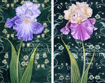Art Nouveau Iris Print Set of 2, Purple, Cream, Lavender on Green, Giclee Fine Art Prints Signed Elizabeth Ruffing on 8.5 x 11  art paper