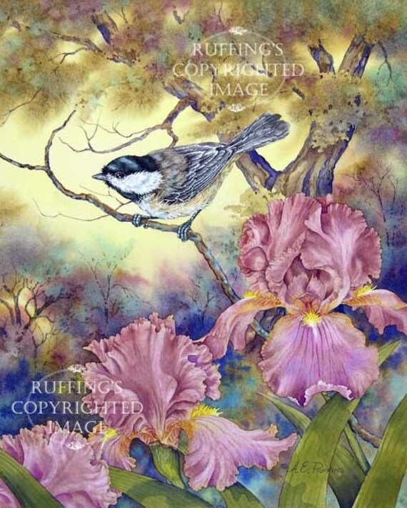 Black-capped Chickadee Pink Iris Giclee Fine Art Floral Bird Print, Gold, Yellow, Signed A E Ruffing, on 8.5 x 11 inch art paper, Vertical