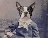 Dog Art, Mixed Media Collage Print, Henry, Portrait of a Boston Terrier
