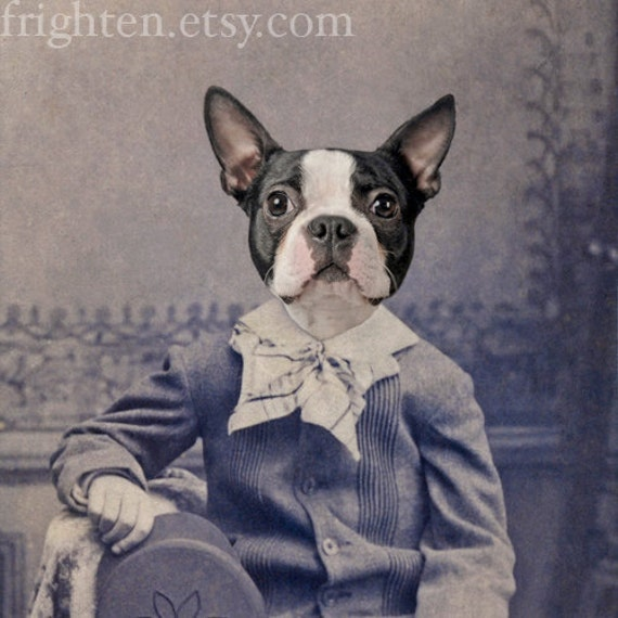 Dog Art, Boston Terrier Dog in Suit Collage Print, Small Wall Art, Zoomorphic Art, Victorian Art Print, Affordable Animal Art Print