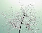 Cherry Blossom Tree Art Photograph Mint Green Soft Pink White DC Cherry Blossom Art 8x10