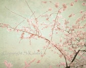 Cherry Blossom Art Photograph Lovely Dreamy Mint Green Pink blossoms Elegant Decor 8x10 - KalstekPhotography
