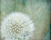Dandelion Seed Photograph Meadow Nature Blue Teal White Fluffy Dandelion Minimalist Photograph 8x8