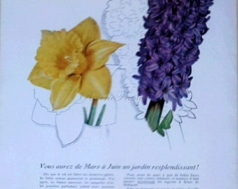 Original Vintage French Ad  Holland Flowers 1954